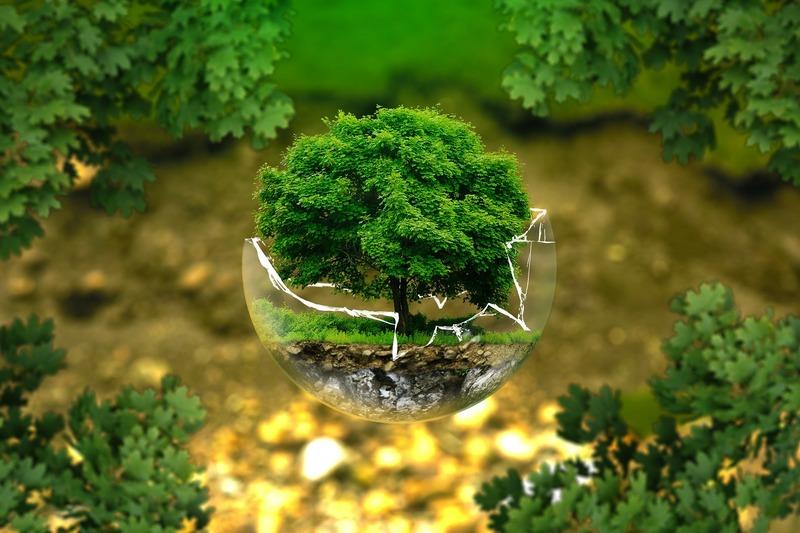Šiandien – Pasaulinė aplinkos apsaugos diena