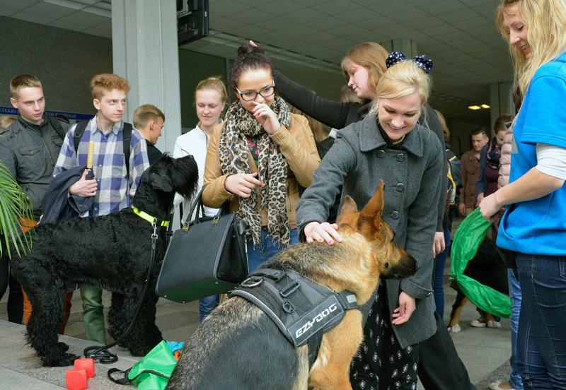 VGTU studentams stresą prieš egzaminus padėjo malšinti šunys
